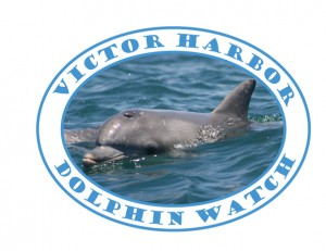 Victor Harbor Dolphin Watch logo
